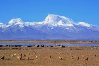 оз. Манасаровар и гора 7728м