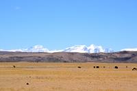Это Тибет!